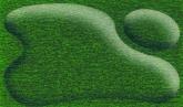 375 Sap Green